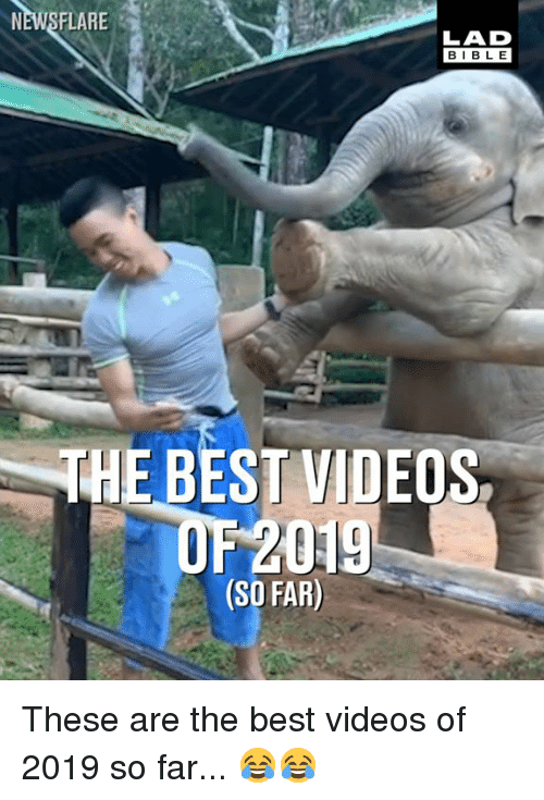 Dank, Videos, and Best: NEWSFLARE  LAD  BIBLE  THE BEST VIDEOS,  OF 2019  (SO FAR) These are the best videos of 2019 so far... 😂😂