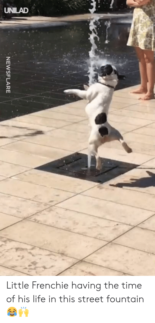 Dank, Life, and Time: NEWSFLARE Little Frenchie having the time of his life in this street fountain 😂🙌