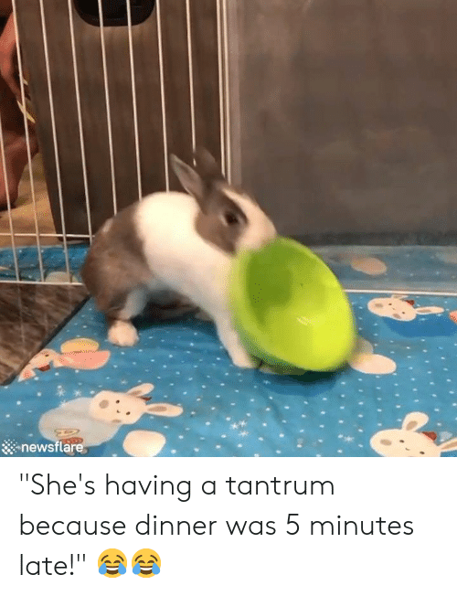 "tantrum: newsflare ""She's having a tantrum because dinner was 5 minutes late!"" 😂😂"