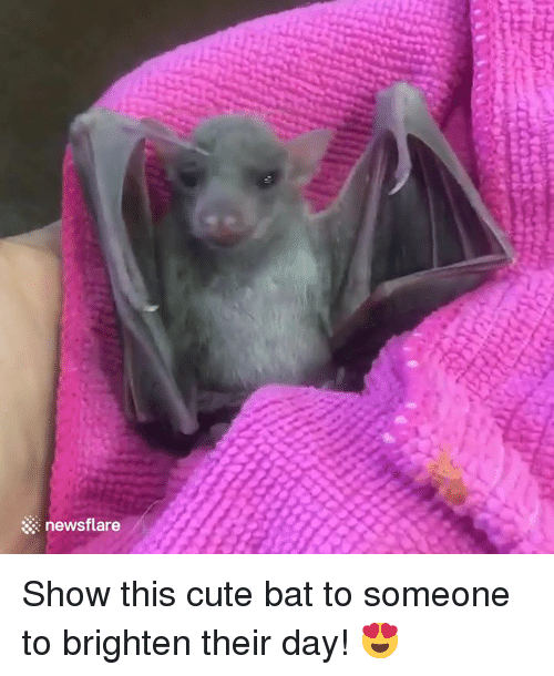 Cute, Bat, and Day: newsflare Show this cute bat to someone to brighten their day! 😍