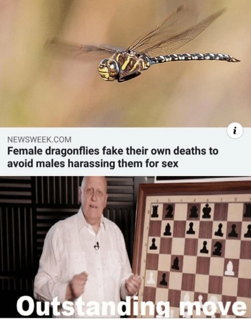newsweek: NEWSWEEK.COM  Female dragonflies fake their own deaths to  avoid males harassing them for sex  Outstanding nove