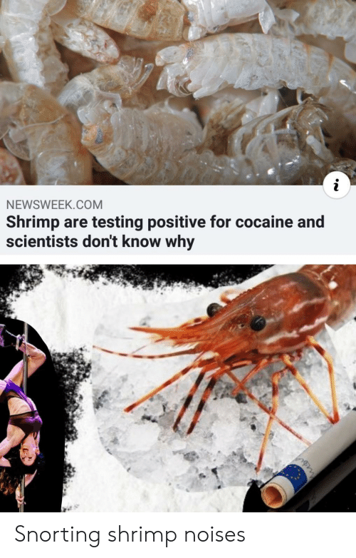 newsweek: NEWSWEEK.COM  Shrimp are testing positive for cocaine and  scientists don't know why Snorting shrimp noises