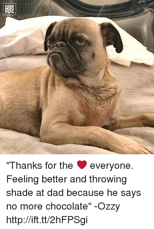 """Memes, Shade, and Throwing Shade: NGG """"Thanks for the ❤ everyone. Feeling better and throwing shade at dad because he says no more chocolate"""" -Ozzy http://ift.tt/2hFPSgi"""