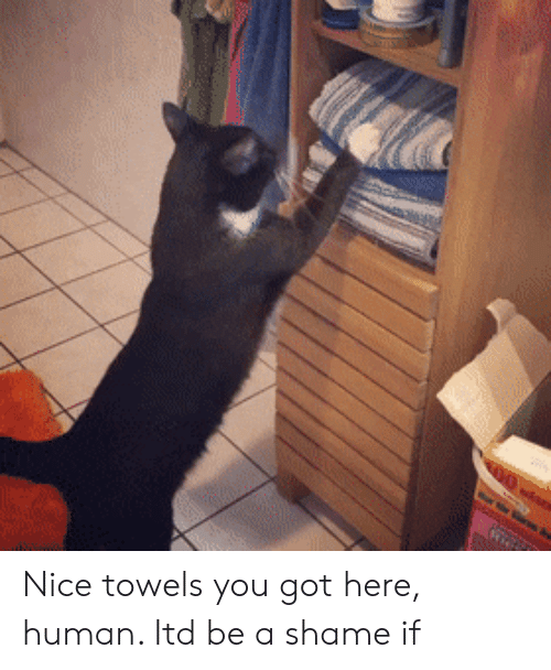 Nice, Got, and Human: Nice towels you got here, human. Itd be a shame if
