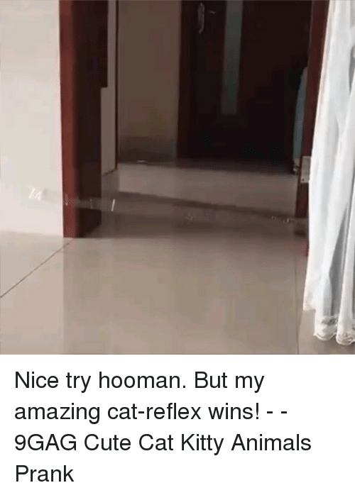 9gag, Animals, and Cute: Nice try hooman. But my amazing cat-reflex wins! - - 9GAG Cute Cat Kitty Animals Prank