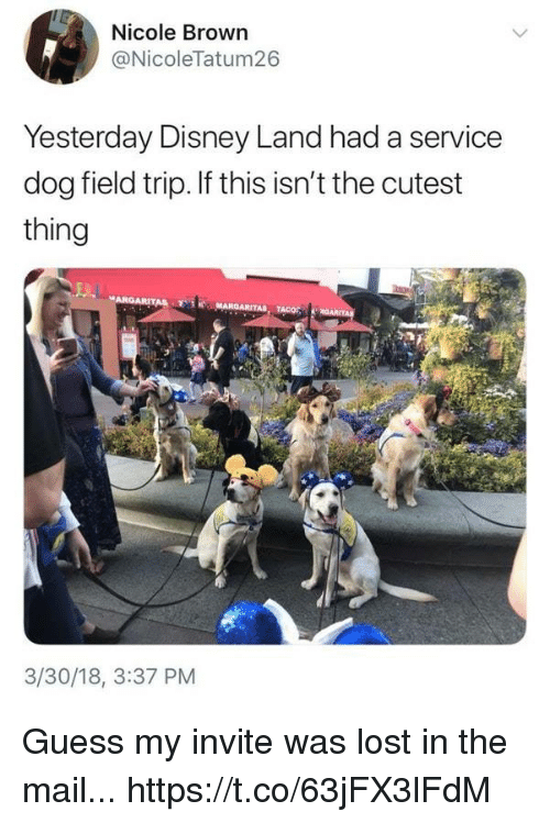Disney, Field Trip, and Funny: Nicole Brown  @NicoleTatum26  Yesterday Disney Land had a service  dog field trip. If this isn't the cutest  thing  3/30/18, 3:37 PM Guess my invite was lost in the mail... https://t.co/63jFX3lFdM