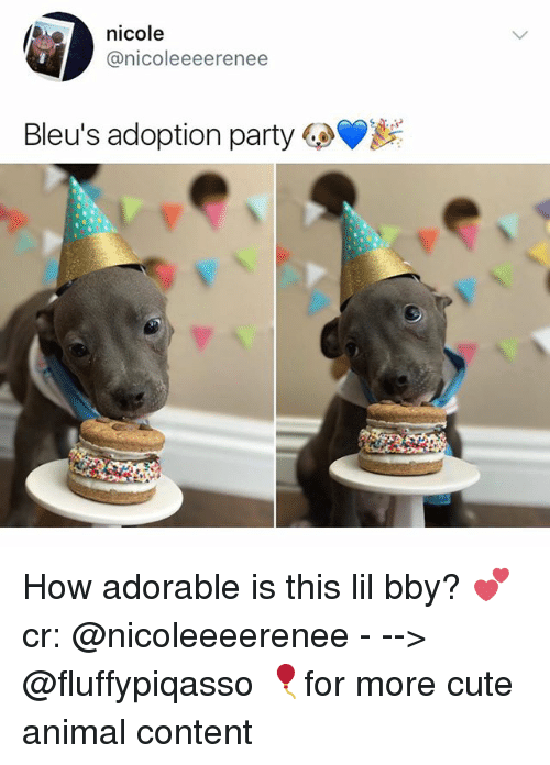 Cute, Memes, and Party: nicole  @nicoleeeerenee  Bleus adoption party GeV How adorable is this lil bby? 💕 cr: @nicoleeeerenee - --> @fluffypiqasso 🎈for more cute animal content