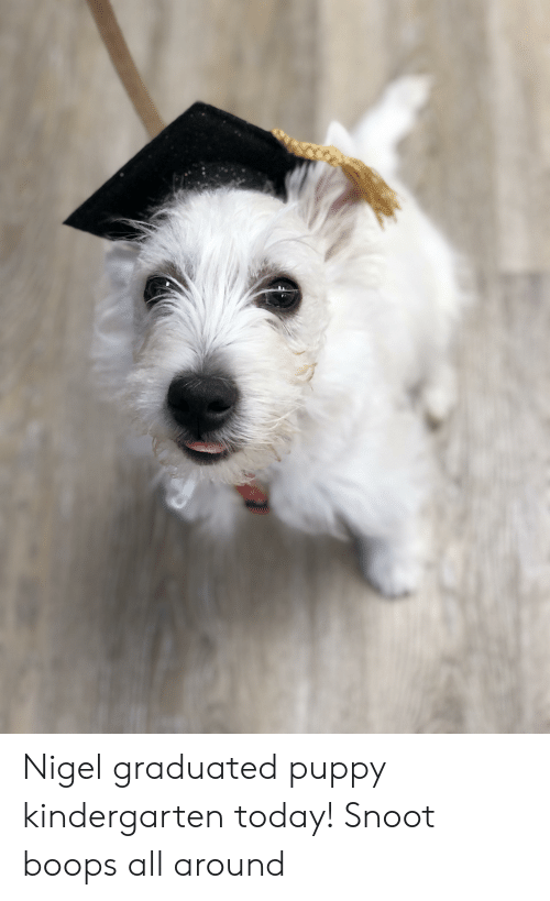 Puppy, Today, and All: Nigel graduated puppy kindergarten today! Snoot boops all around