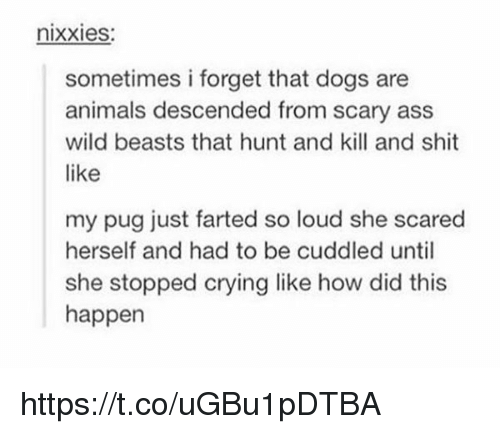 Pugly: nixxies:  sometimes i forget that dogs are  animals descended from scary ass  wild beasts that hunt and kill and shit  like  my pug just farted so loud she scared  herself and had to be cuddled until  she stopped crying like how did this  happen https://t.co/uGBu1pDTBA