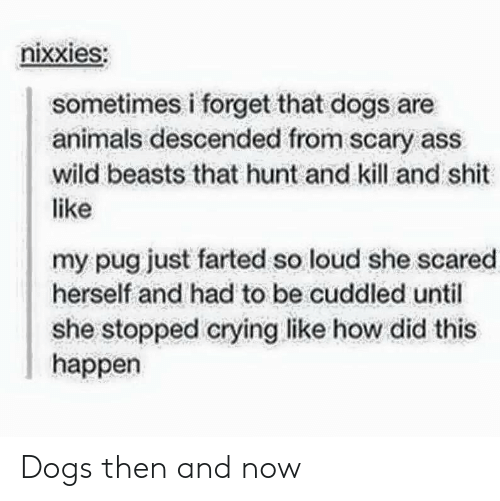 Farted: nixxieS:  sometimes i forget that dogs are  animals descended from scary ass  wild beasts that hunt and kill and shit  like  my pug just farted so loud she scared  herself and had to be cuddled until  she stopped crying like how did this  happen Dogs then and now