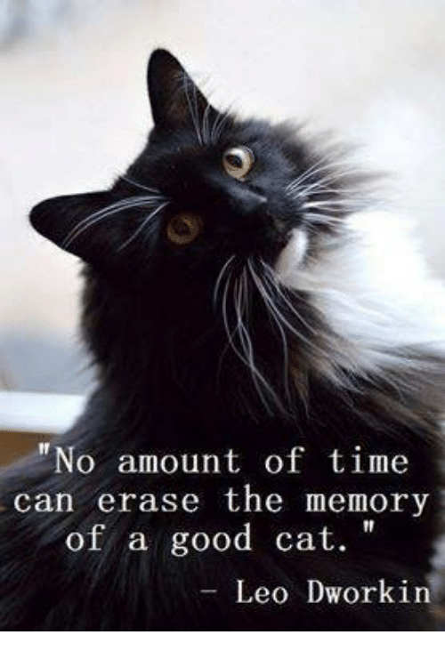 Memes, Good, and Time: No amount of time  can erase the memory  of a good cat.  Leo Dworkin