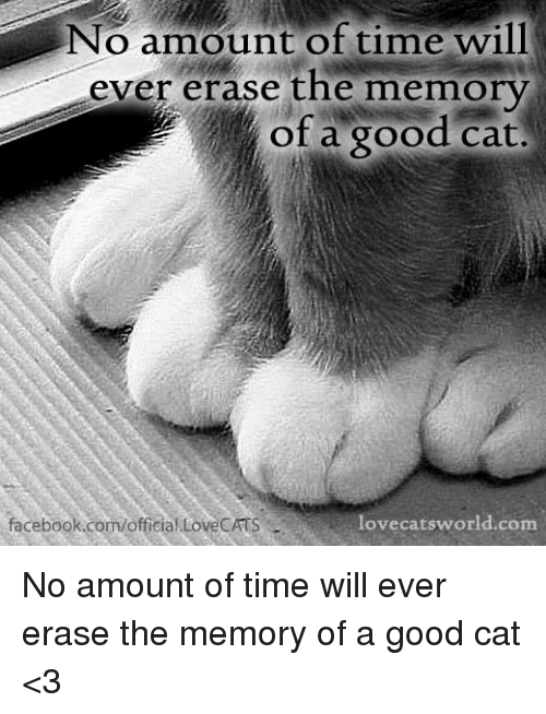 Memes, 🤖, and Memory: No amount of time will  ever erase the memory  of a good cat.  lovecats world.com  facebook.com/official LoveCATS No amount of time will ever erase the memory of a good cat <3