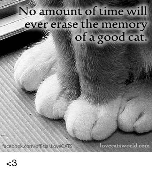 Facebook, Memes, and facebook.com: No amount of time will  ever erase the memory  of a good cat.  facebook.com/official.LoveCATS  lovecatsworld.com <3