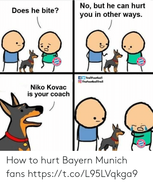 Memes, How To, and Bayern: No, but he can hurt  you in other ways  Does he bite?  f TrollFootball  TheFootballTroll  Niko Kovac  is your coach How to hurt Bayern Munich fans https://t.co/L95LVqkga9