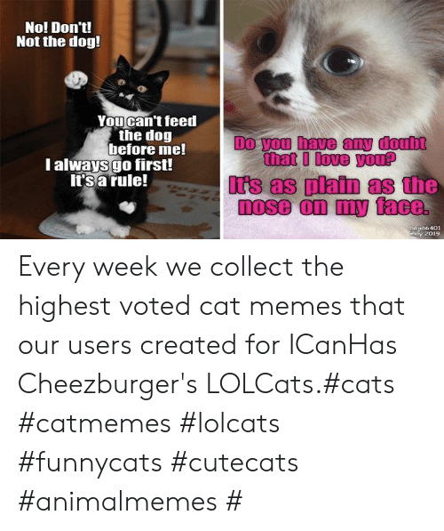 irs: No! Don't!  Not the dog!  Youcan't feed  the dog  before me!  l always go first!  It's a rule!  Do you have any doub  that I love you?  Irs as platn as the  a106401  may 2019 Every week we collect the highest voted cat memes that our users created for ICanHas Cheezburger's LOLCats.#cats #catmemes #lolcats #funnycats #cutecats #animalmemes #