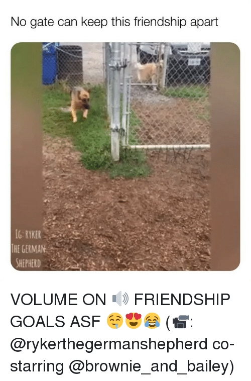 Friendship Goals: No gate can keep this friendship apart  G RYKER  THE GERMAN VOLUME ON 🔊 FRIENDSHIP GOALS ASF 🤤😍😂 (📹: @rykerthegermanshepherd co-starring @brownie_and_bailey)
