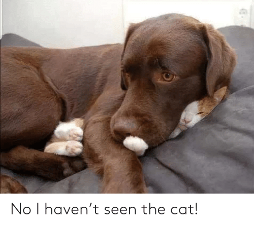 No I: No I haven't seen the cat!
