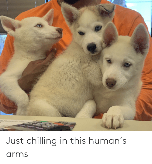Arms, Human, and This: NO Just chilling in this human's arms