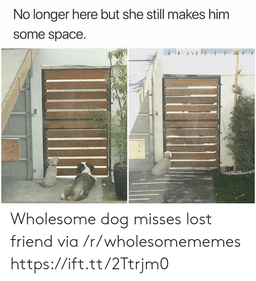 Lost, Space, and Wholesome: No longer here but she still makes him  some space. Wholesome dog misses lost friend via /r/wholesomememes https://ift.tt/2Ttrjm0