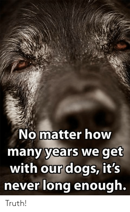 Dogs, Memes, and Never: No matter how  many years we get  with our dogs, it's  never long enough. Truth!