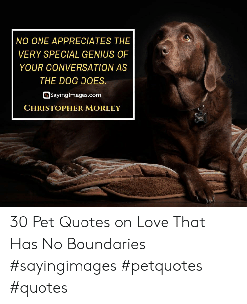 Love, Genius, and Quotes: NO ONE APPRECIATES THE  VERY SPECIAL GENIUS OF  YOUR CONVERSATION AS  THE DOG DOES.  Sayinglmages.com  CHRISTOPHER MORLEY  ALLIE 30 Pet Quotes on Love That Has No Boundaries #sayingimages #petquotes #quotes