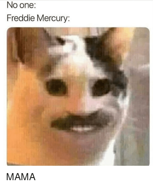 Memes, Mercury, and Freddie Mercury: No one:  Freddie Mercury: MAMA