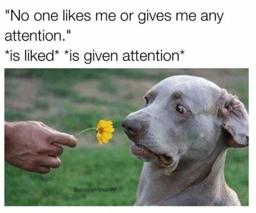 """One, Likes, and Attention: """"No one likes me or gives me any  attention.""""  *is liked"""" *is given attention*  @dontgetpupset"""