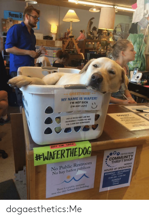 thrift shop: No  Orma &  GREETINGS!  MY NAME IS WAFER!  I'M NOT SICKi  (rm JUST LAZY)  rM A 2 YR OLD BOY LAB MIX  I'M FRIENDLY, PLEASE PET ME  P.S. I LOVE EAR SCRATCHES  000 ESTES PARK  No Public Restroom  No hay baños públicos  e COMMUNITY  THRIFT SHOP  HORAS  HOURS OF OPERATION  MONDAY-SATURDAY  10:00 AM-4.00 PM  SUNDAY  There is a public restroonm  near the river behind this building. dogaesthetics:Me