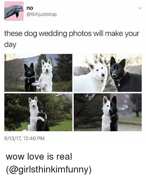 Love, Memes, and Wow: no  @tbhjuststop  these dog wedding photos will make your  day  6/13/17, 12:40 PM wow love is real (@girlsthinkimfunny)