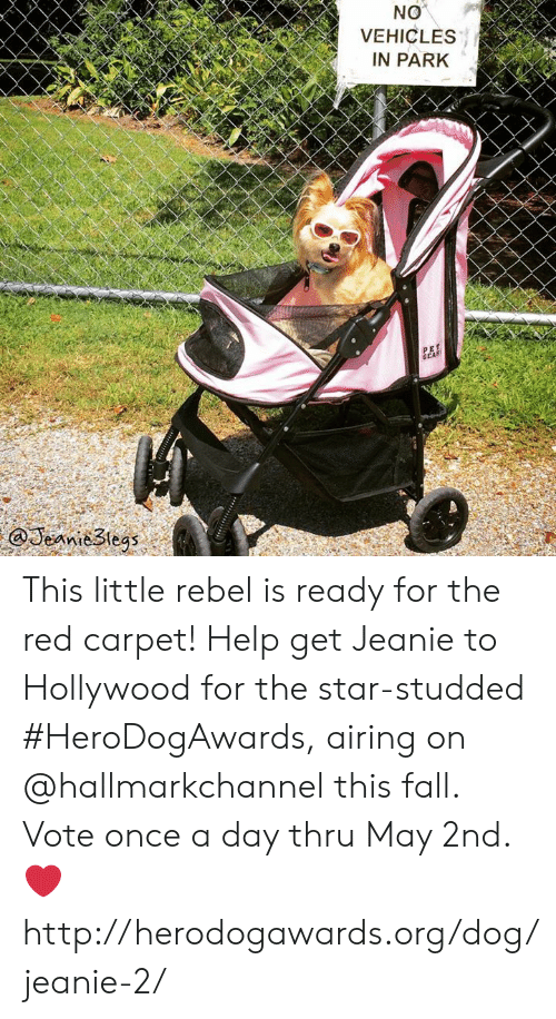 Hallmarkchannel: NO  VEHICLES  IN PARK  GEA  @Jeanie3tegs This little rebel is ready for the red carpet! Help get Jeanie to Hollywood for the star-studded #HeroDogAwards, airing on @hallmarkchannel this fall.  Vote once a day thru May 2nd. ❤️ http://herodogawards.org/dog/jeanie-2/