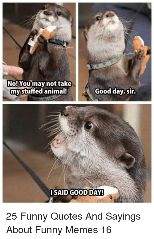 Funny, Memes, and Animal: No!Youmay not take  my stuffed animal!  Good day,sir.  SAID GOODDAY! 25 Funny Quotes And Sayings About Funny Memes 16