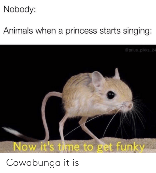 Animals, Singing, and Princess: Nobody:  Animals when a princess starts singing:  @prius pikks 24  Now it's tme to get funky Cowabunga it is
