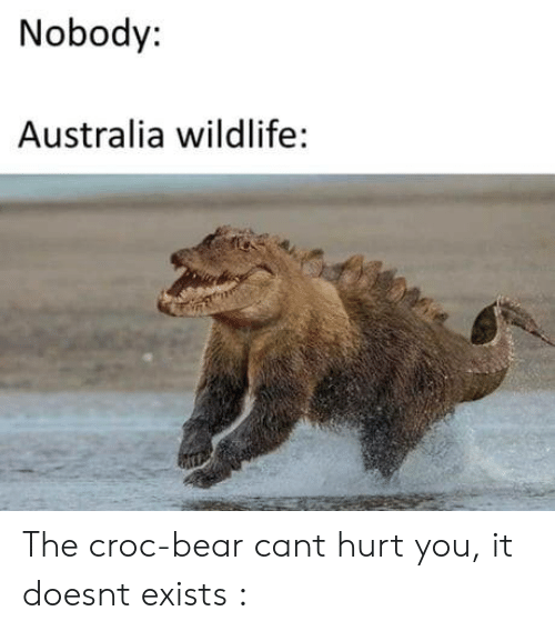 Australia, Bear, and Can: Nobody:  Australia wildlife: The croc-bear cant hurt you, it doesnt exists :