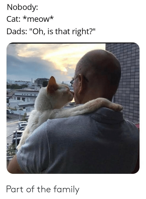 """Family, Cat, and Meow: Nobody:  Cat: *meow*  Dads: """"Oh, is that right?"""" Part of the family"""