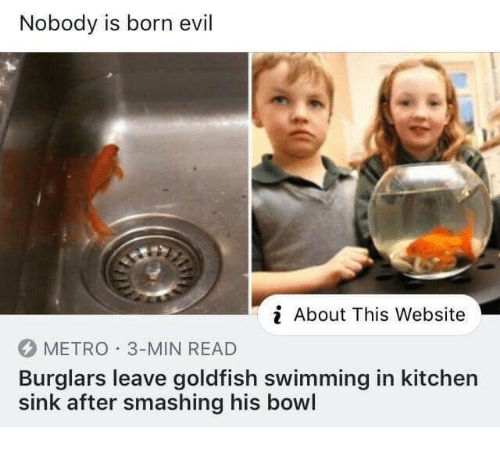Goldfish, Metro, and Evil: Nobody is born evil  About This Website  METRO 3-MIN READ  Burglars leave goldfish swimming in kitchen  sink after smashing his bowl