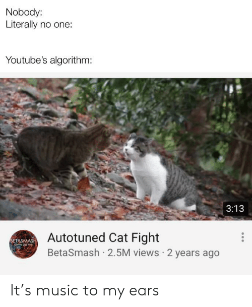 cat fight: Nobody:  Literally no one:  Youtube's algorithm:  3:13  Autotuned Cat Fight  BetaSmash 2.5M views 2 years ago  BETASMASH It's music to my ears