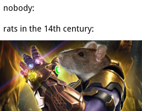 Nobody, Century, and  Rats: nobody:  rats in the 14th century: