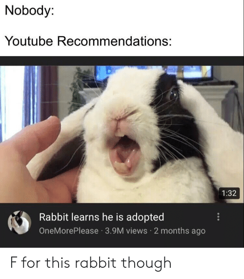 recommendations: Nobody:  Youtube Recommendations:  1:32  Rabbit learns he is adopted  OneMorePlease 3.9M views 2 months ago F for this rabbit though