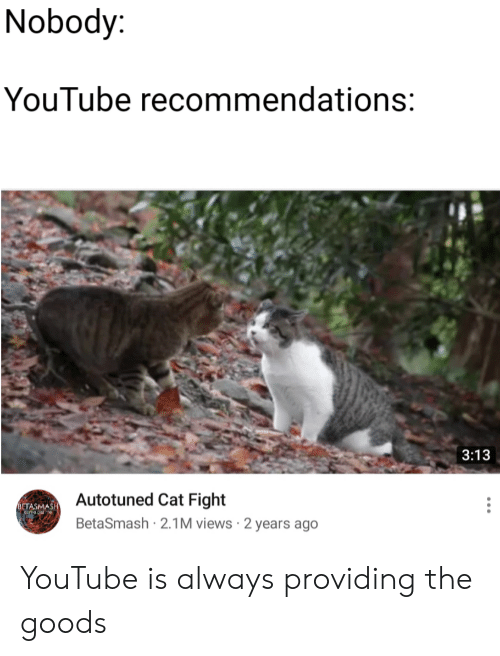 cat fight: Nobody  YouTube recommendations:  3:13  Autotuned Cat Fight  BetaSmash 2.1M views 2 years ago  BETASMAS YouTube is always providing the goods