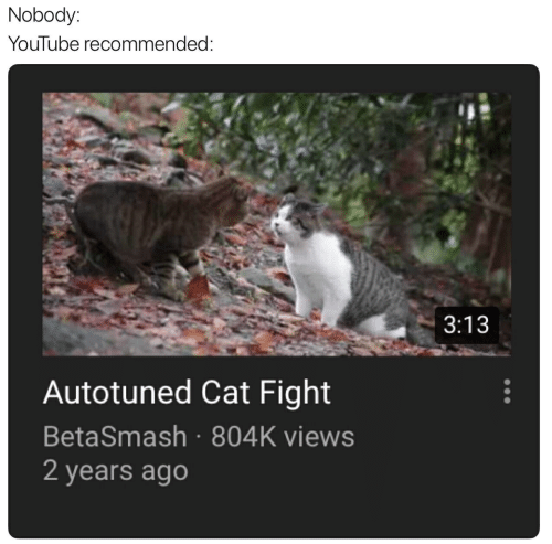 cat fight: Nobody:  YouTube recommended  3:13  Autotuned Cat Fight  BetaSmash 804K views  2 years ago
