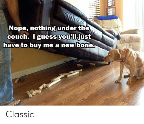 Dank, Couch, and Nope: Nope, nothing under the  couch. I guessyou'lljust  have to buy me a new bone Classic
