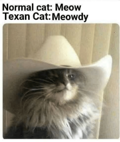 Texan, Cat, and Meow: Normal cat: Meow  Texan Cat: Meowdy