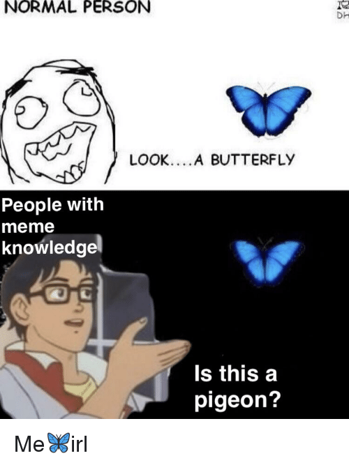 is this a butterfly