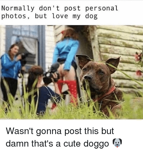 Cute, Love, and Memes: Normally don't post personal  photos, but love my dog Wasn't gonna post this but damn that's a cute doggo 🐶