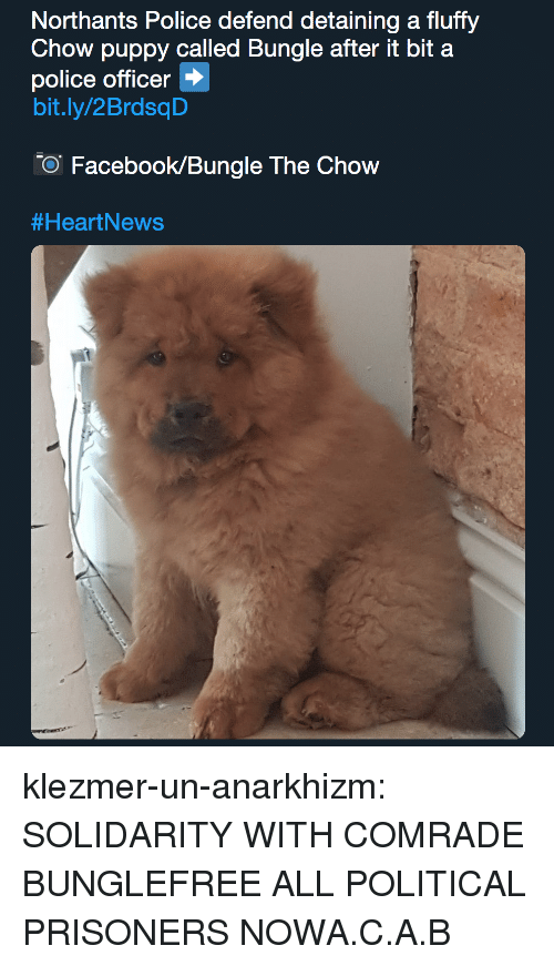chow: Northants Police defend detaining a fluffy  Chow puppy called Bungle after it bit a  police officer  bit.ly/2BrdsqD  O Facebook/Bungle The Chow  klezmer-un-anarkhizm:  SOLIDARITY WITH COMRADE BUNGLEFREE ALL POLITICAL PRISONERS NOWA.C.A.B