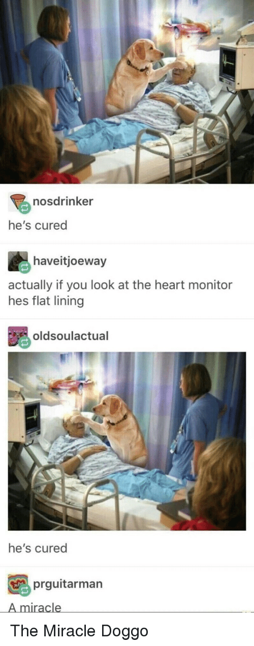 Heart, Doggo, and You: nosdrinker  he's cured  haveitjoeway  actually if you look at the heart monitor  hes flat lining  oldsoulactual  he's cured  prguitarman  A miracle The Miracle Doggo