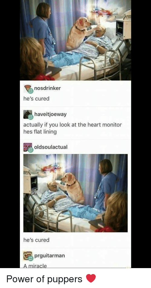 Heart, Power, and You: nosdrinker  he's cured  haveitjoeway  actually if you look at the heart monitor  hes flat lining  oldsoulactual  he's cured  prguitarman  A miracle Power of puppers ❤