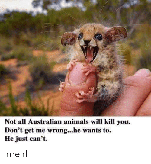 Animals, Australian, and MeIRL: Not all Australian animals will kill you.  Don't get me wrong...he wants to.  He just can't. meirl