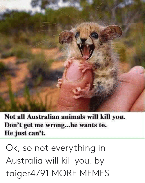 Animals, Dank, and Memes: Not all Australian animals will kill you.  Don't get me wrong...he wants to.  He just can't. Ok, so not everything in Australia will kill you. by taiger4791 MORE MEMES