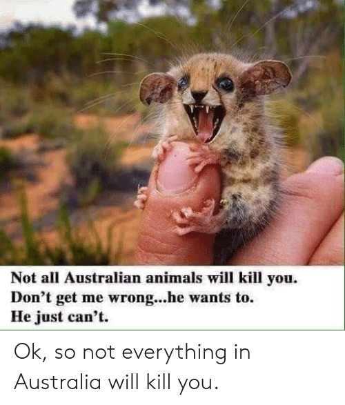 Animals, Australia, and Australian: Not all Australian animals will kill you.  Don't get me wrong...he wants to.  He just can't. Ok, so not everything in Australia will kill you.